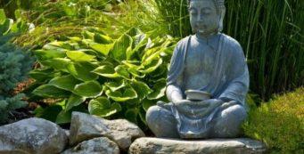 Meditación y Mindfulness (Curso 2019-2020)